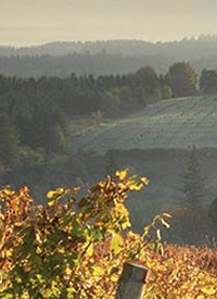 Evergreen Escapes offers Willamette Valley Wine Trail Half Day Tour